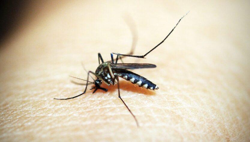 A mosquito image.