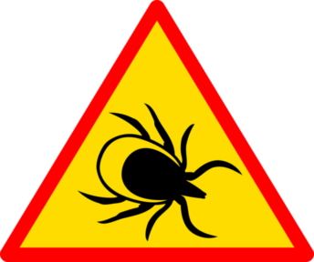 LYME DISEASE CATEGORY IMAGE